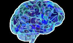 Acidente Vascular Cerebral (AVC):  uma doença comum e muito grave