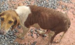 Moradora da Sede pede ajuda para tratamento de cadela que está próxima de dar à luz