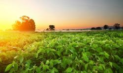 Produção de grãos deve chegar a 268,3 milhões de toneladas