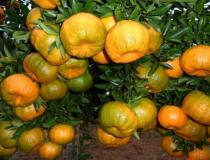 Presidente Kennedy abre cadastramento para novo programa de fruticultura