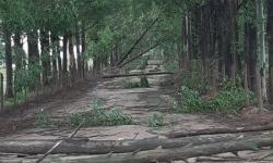 Vento derruba árvores em Areinha e interdita estrada
