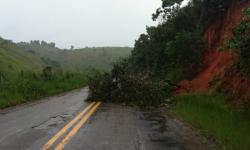 Árvores caem e deixam rodovia ES-162 parcialmente bloqueada