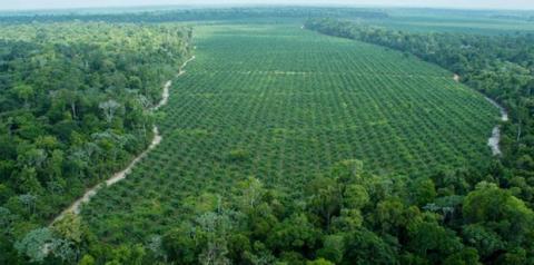 Compra segura de fazendas no estado do Pará é um desafio vencido