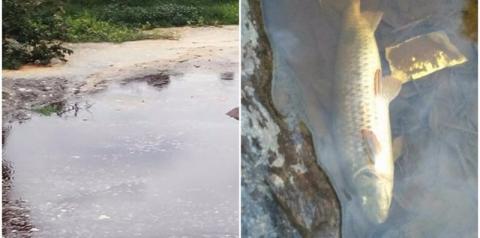 Uniaves limpa área de rio atingida por vazamento