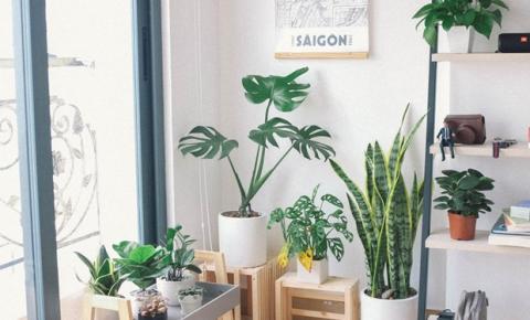 Habitissimo destaca as espécies de plantas mais indicadas para apartamentos e casas