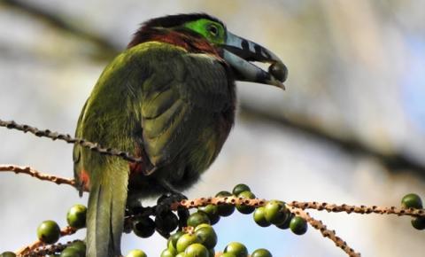 Primavera dá início à melhor temporada para observação de aves