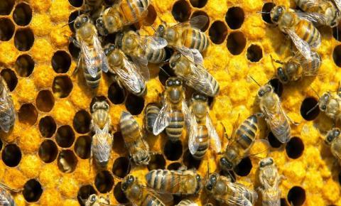 Motorista se joga de terraço após ser atacado por abelhas em Presidente Kennedy