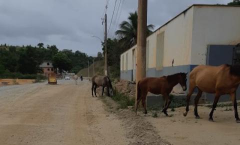 Cavalos são flagrados soltos na Avenida Orestes Baiense