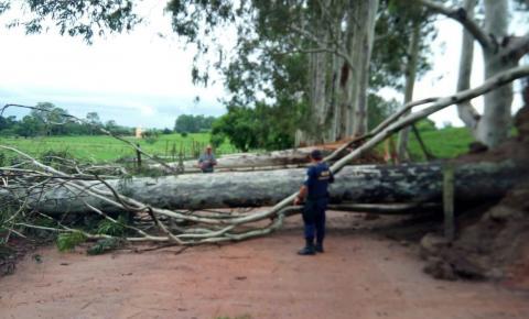 Chuvas causam estragos e interditam vias do município; GCM desobstruiu vias