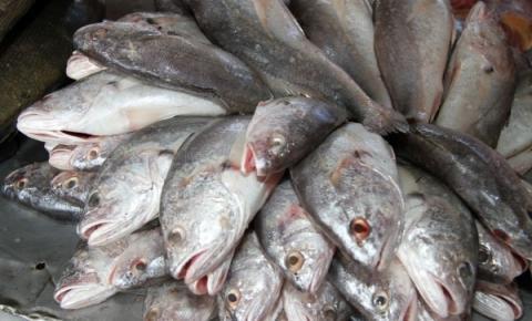 Prefeitura de Itapemirim compra R$ 3.484.800 milhões em peixes