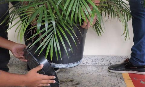 Cuidados com a dengue devem permanecer mesmo no período de inverno