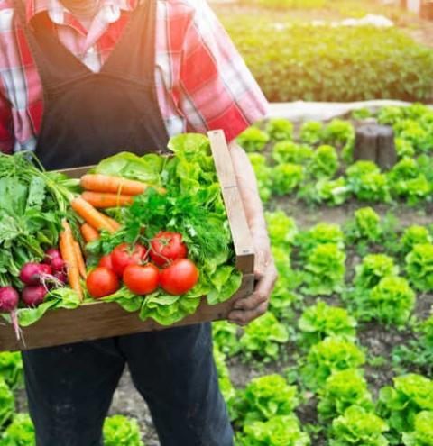 Prefeitura esclarece sobre a não entrega de cestas de alimentos